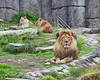 African Lions, Jahari, Amanzi & Sukari