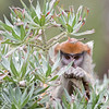 Young Freida doesn't miss anything!  <br /> (Patas Monkey)